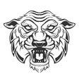 tiger head isolated on white background images vector image