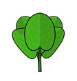 Spinach isolated Bunch of green Fresh green leaf vector image