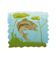 largemouth bass jumping vector image vector image