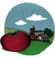 tomato scene color vector image