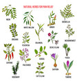 Best natural herbs for pain relief vector image