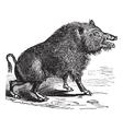Wild boar Sketch vector image