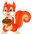 Cartoon funny squirrel holding acorn isolated vector image vector image