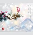 pine tree branch and sakura in blossom vector image