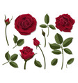 set of red rose flower parts vector image