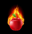 Red apple in the fire vector image