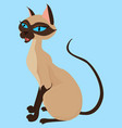 siamese cat sitting isolated on blue vector image