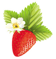 strawberry design vector image vector image