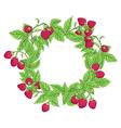 Raspberry frame vector image