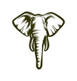 head of african elephant vector image