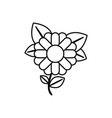monochrome contour abstract sunflower with stem vector image