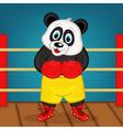 panda boxer on ring vector image vector image