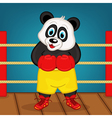 panda boxer on ring vector image
