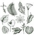 hand drawn tropical plants monochrome set vector image vector image