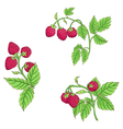 raspberry color vector image