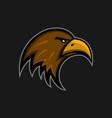 mascot eagle logo sports club falcon head emblem vector image