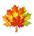 bouquet of autumn leaves vector image