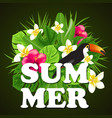 decorative summer background vector image vector image