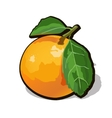 fresh ripe orange with leaves vector image