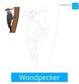 Woodpecker bird learn to draw vector image