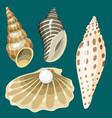 sea marine animals and shells souvenirs cartoon vector image