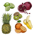tropical fruits pineapple lime pomegranate vector image