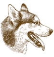 etching of husky dog head vector image