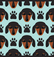 little dachshund puppy head seamless pattern dog vector image