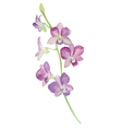 Watercolor of orchid flower isolated vector image