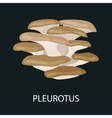 Branch of oyster mushroom Pleurotus ostreatus vector image