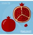 Pomegranate icon vector image