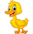 Cartoon funny baby duck posing isolated vector image