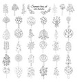 hand drawn monochrome floral elements set vector image