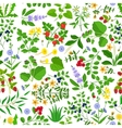 Wild herbs flowers and berries pattern vector image