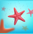 Summer ocean travel or vacations starfish poster vector image