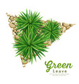 mini mondo grass small tree vector image vector image