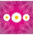 chamomiles on pink ornate background vector image