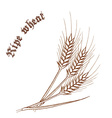 pencil hand drawn of wheat with label ripe wheat vector image