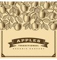 Retro apple harvest card brown vector image