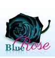 Blue Rose On white Background with Text vector image vector image