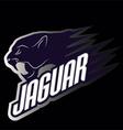 Head Jaguar professional logo for a club vector image