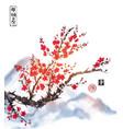 oriental sakura cherry tree in blossom on white vector image