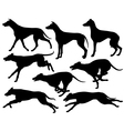 Greyhound dog silhouettes vector image vector image