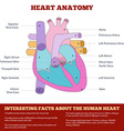 Diagram of human heart anatomy vector image