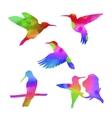 watercolor colibri set vector image