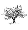 Hand sketch tree Flowering cherry vector image