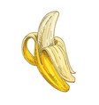 banana full color realistic sketch vector image