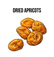 Pile of dried apricots sketch style hand drawn vector image