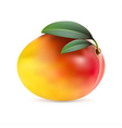 Mango fruit with leaves vector image