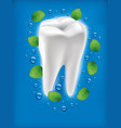 white tooth with fresh mint leaf and water drops vector image vector image